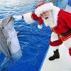 Новый год с дельфинами (Dolphin Planet, Россия)