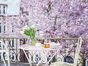 Цветение розовой вишни в Париже