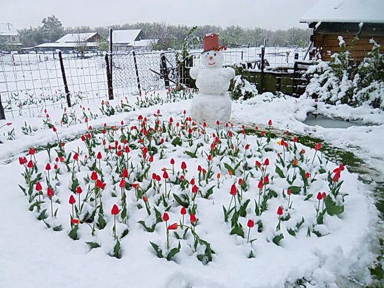 Снежный май....