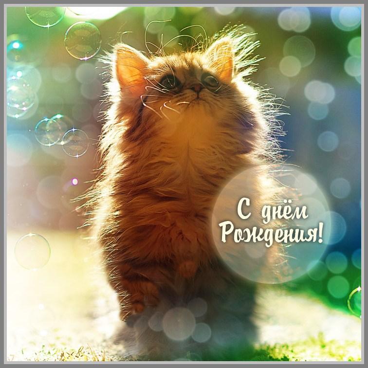Поздравления с днём рождения котёнок